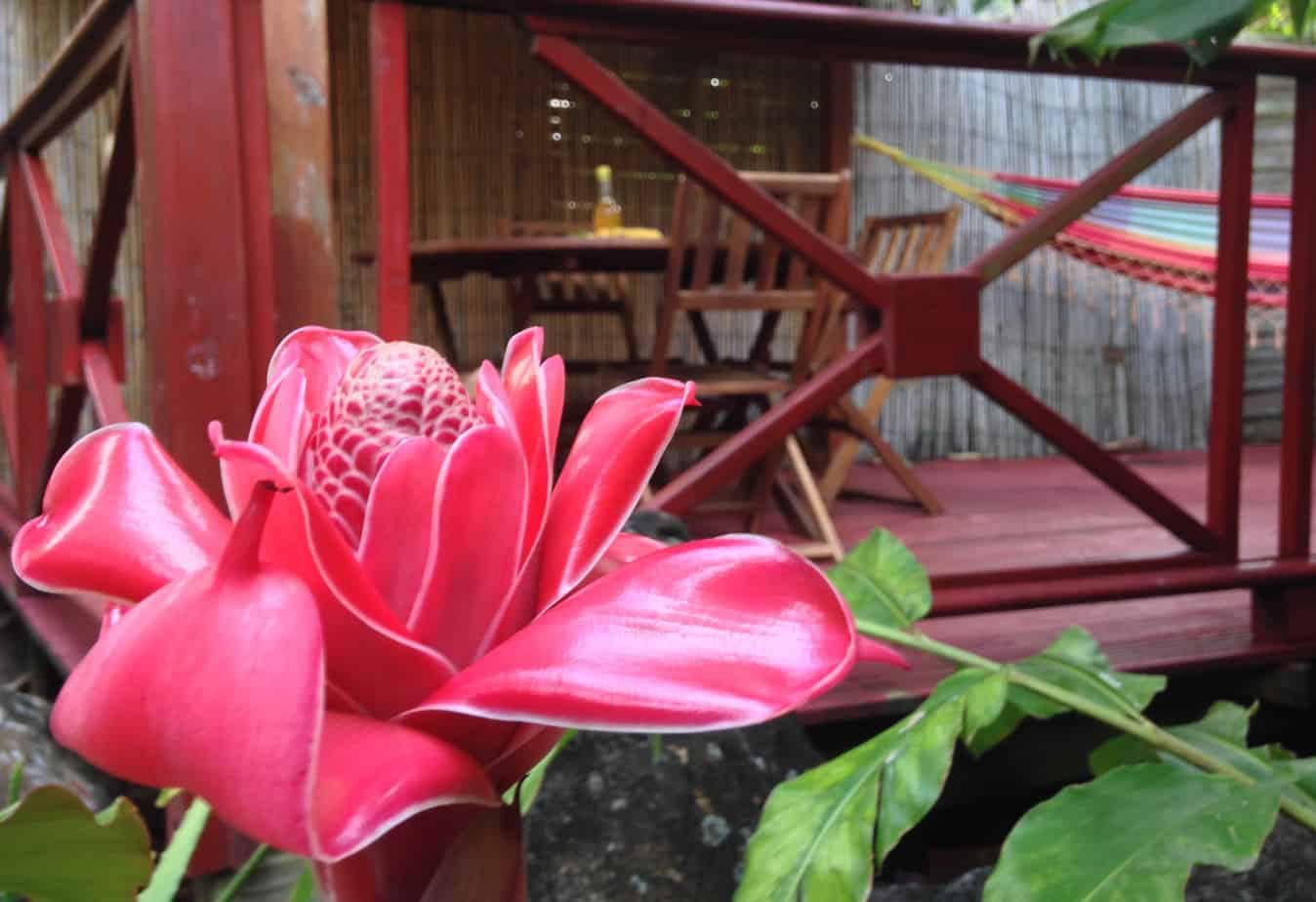 [:fr]À découvrir à Deshaies… un paradis végétal à deux pas du Jardin Botanique[:]