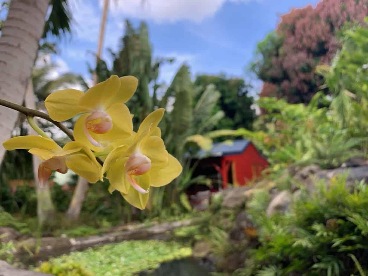 Le Morne aux Fous - Gîtes Deshaies - Location de vacances Guadeloupe - vue extérieure
