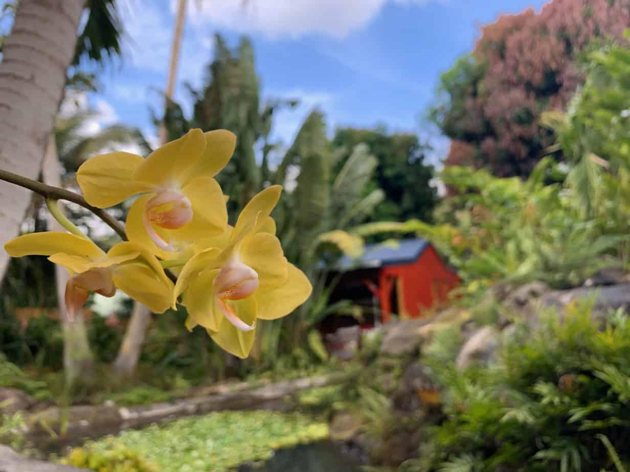 Gites à Deshaies - Locations de vacances en Guadeloupe : 6 logements dans un cadre naturel tropical, proche de la mer et du village.